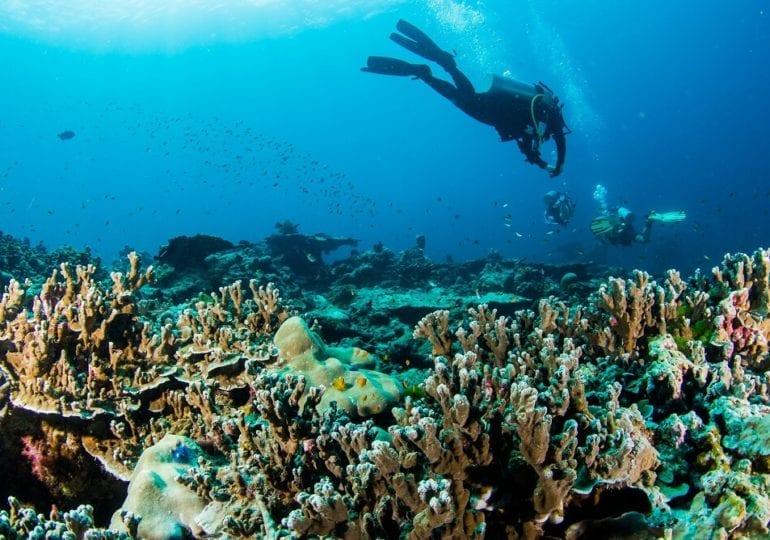 Tauchen in den abenteuerlichen Gewässern von Phuket