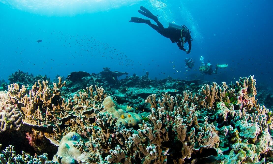 Tacuher schwimmen über einem Korallenriff in Phuket