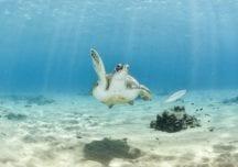 Aruba: Das berühmteste Wracktauchgebiet der Welt