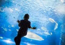 Nordsee Ozeanarium in Dänemark: Das größte Aquarium Nordeuropas
