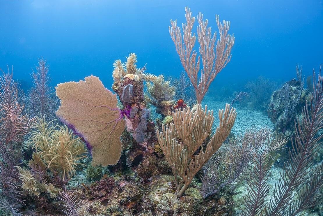 Korallen unter Wasser an einem Felsen