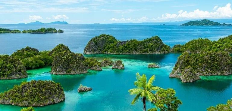 Raja Ampat: Rekord-Vielfalt an maritimer Flora und Fauna
