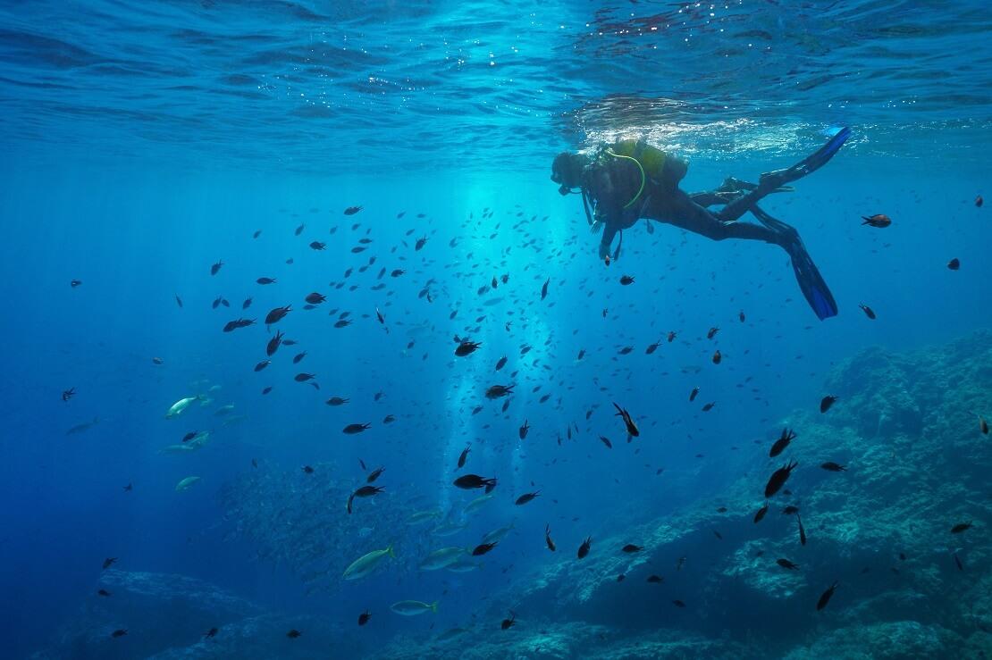 Taucher mit Fischschwarm
