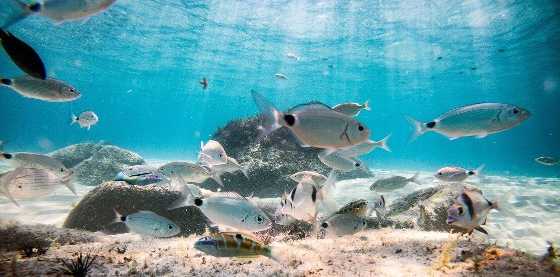 La Dolce Vita: Tauchen vor Sardinien