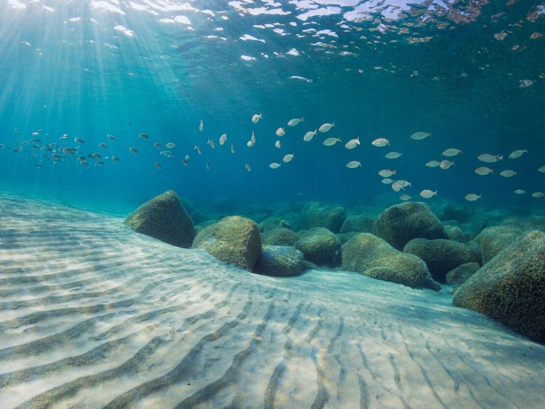 Fische über Sandboden