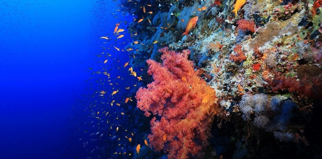 Viele Haie und starke Strömungen am Daedalus-Riff