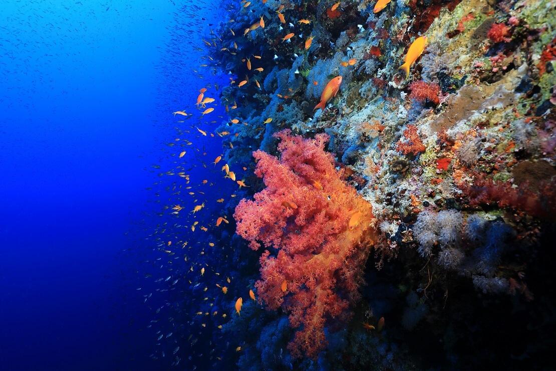 Eine mit Korallen bewachsene Steilwand