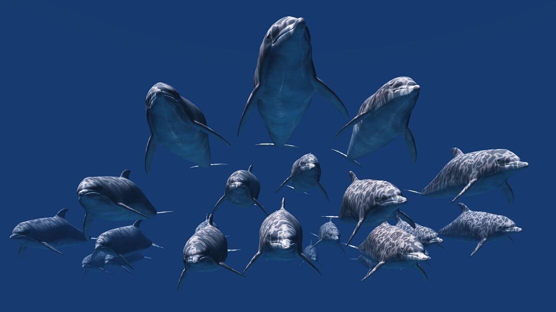 Delfin Schule unter Wasser