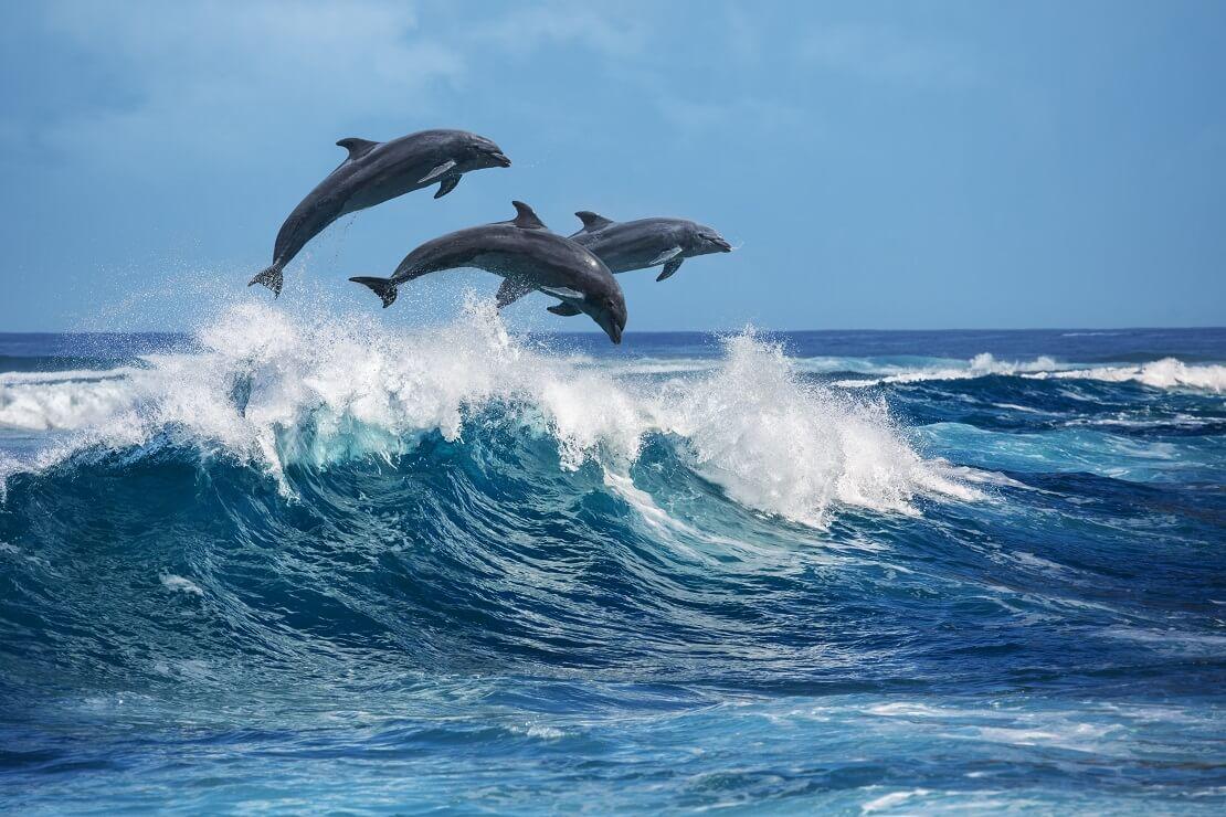 Drei Delfine springen aus dem Meer