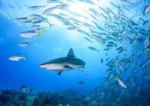 Malpelo: Schönheit und Gefahr im östlichen Pazifik
