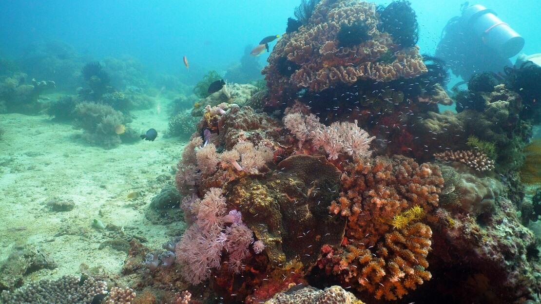 Korallenriff vor Mindoro