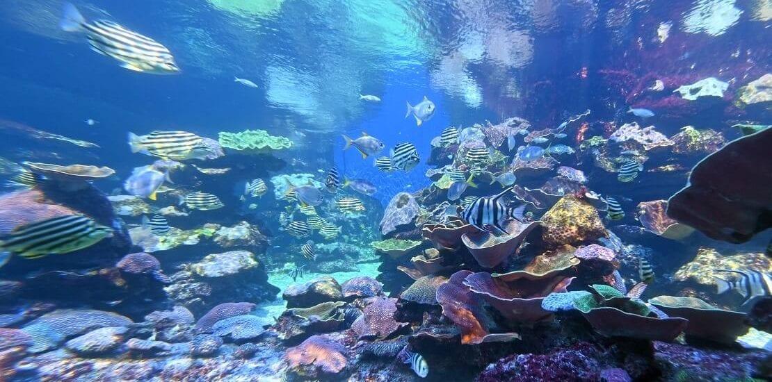 Über 500 Fischarten im Ningaloo Marine Park