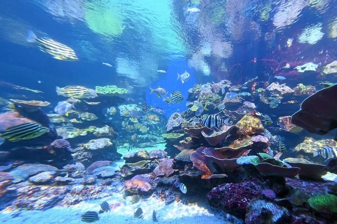 Korallenriff des Ningaloo Marine Parks