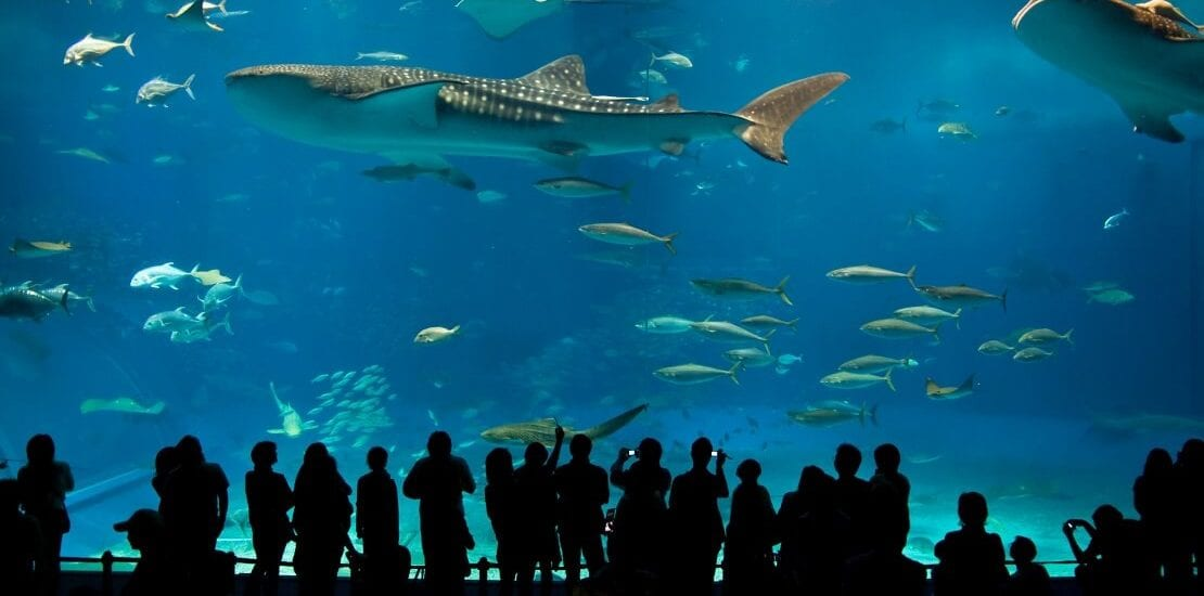Okinawa-Churaumi-Aquarium: Weltrekorde hautnah