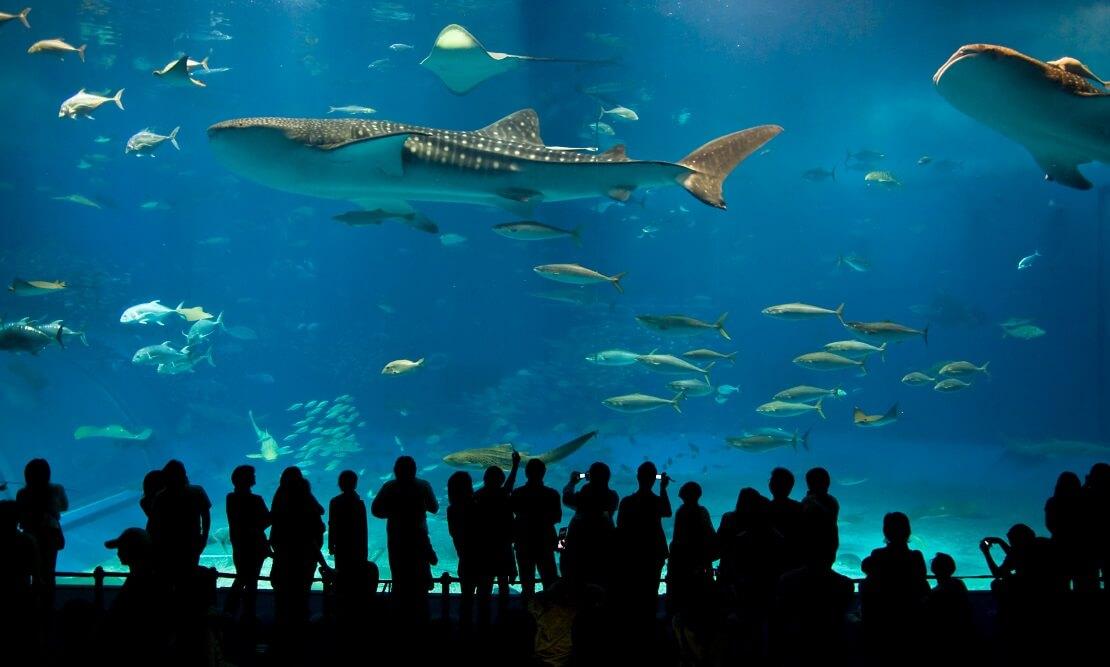 Besucher beobachten das riesige Aquarium