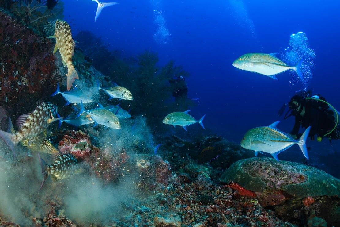 Fischschwarm vor einem Korallenriff