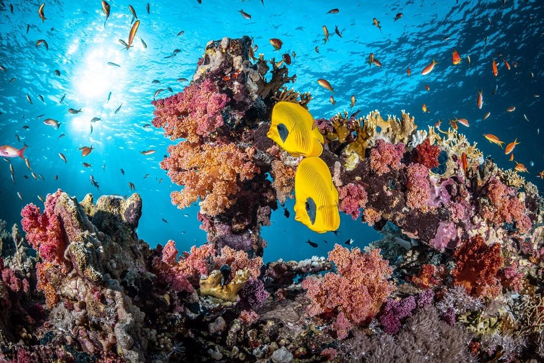 Korallenriff im Ras Mohammed Nationalpark