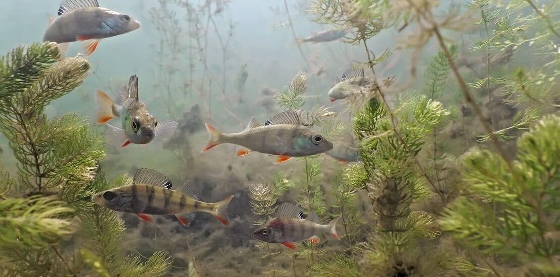 Thüringen: Eine Unterwasser-Stadt im Sundhäuser See