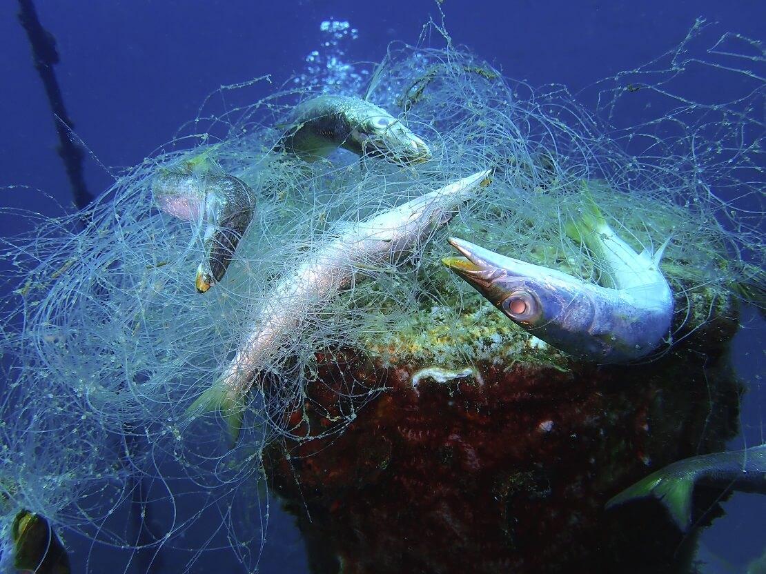 Fische verfangen sich im Geisternetz