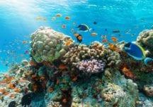Malediven: Mit Mantas im Nord-Malé-Atoll