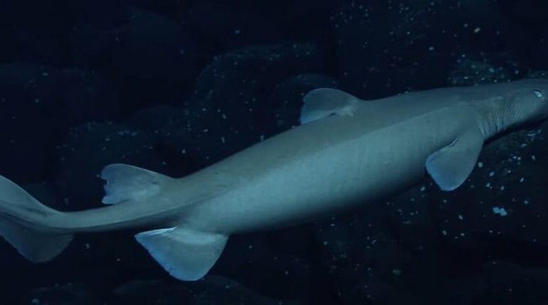 Neuseeland: Leuchtende Haie in den Tiefen entdeckt