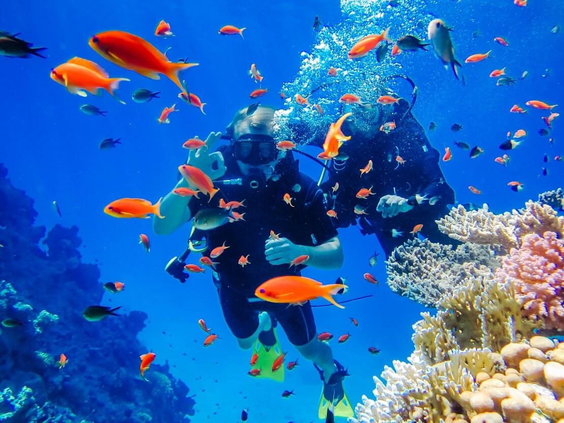 Zwei Taucher in einem orangen Fisch-Schwarm