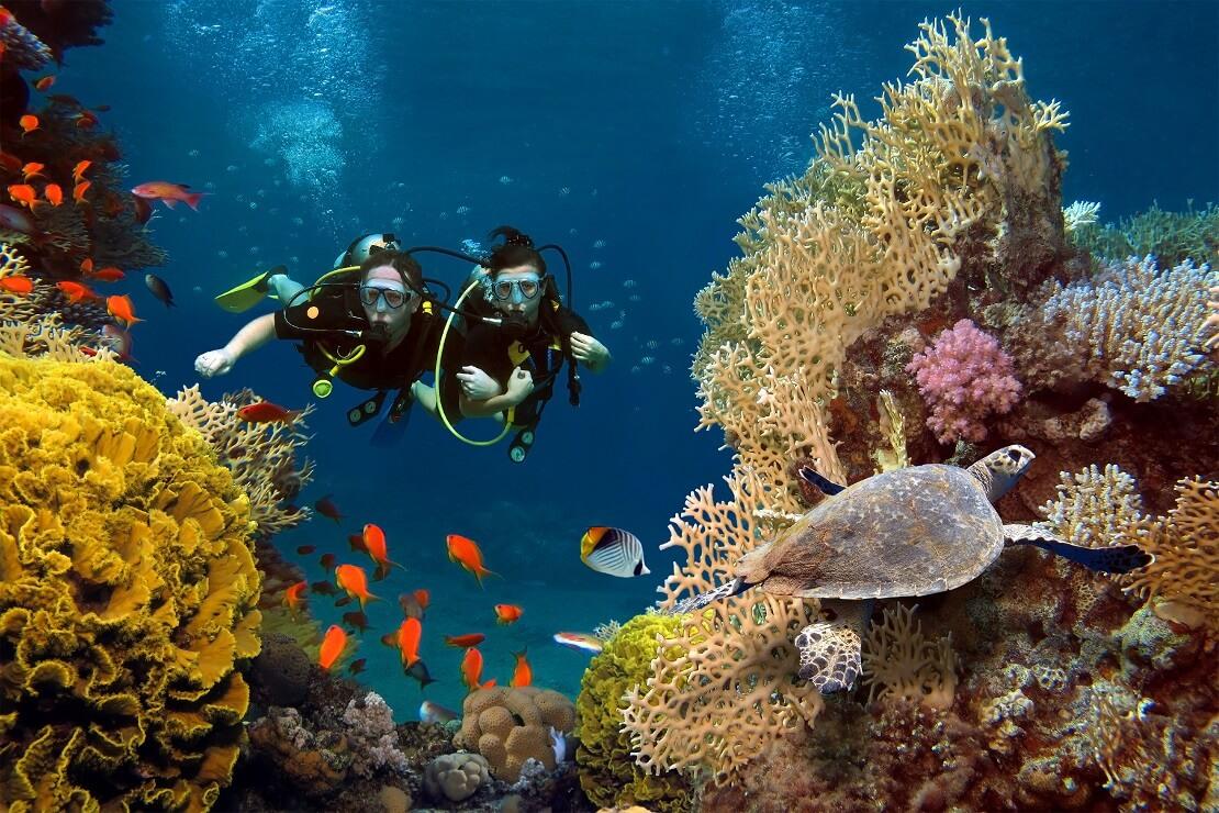 Zwei Taucher zwischen Korallen