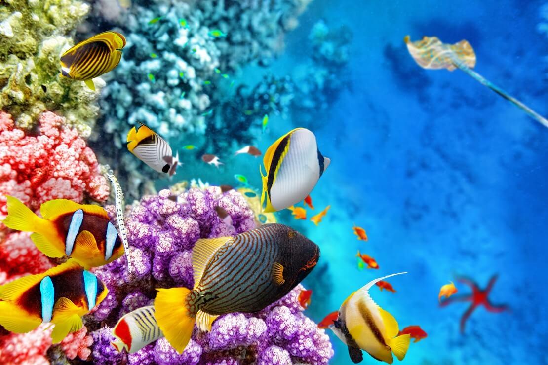 Verschiedene, bunte Fische über farbenfrohen Korallen