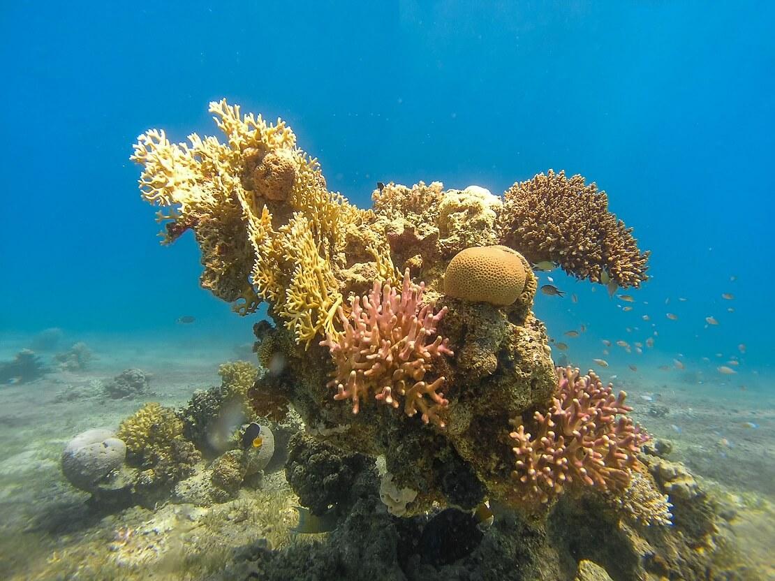 Eine faszinierende Korallenformation auf dem Grund des Meeres