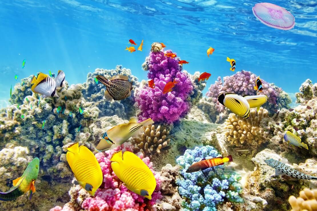 Bunte Fische schwimmen vor farbigen Korallen