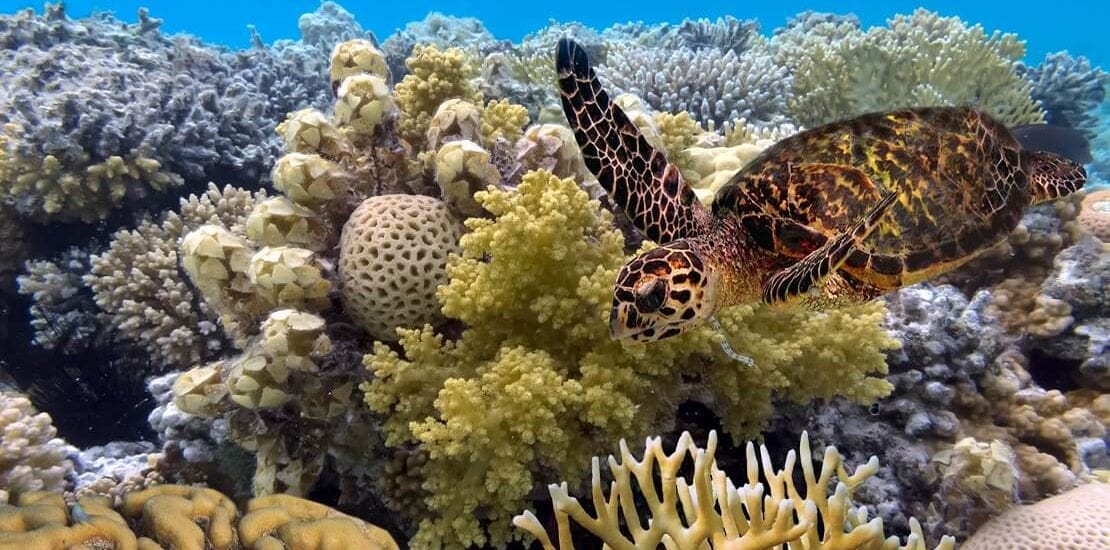"""""""Passions of Paradise"""": Hobbytaucher helfen bei der Korallenaufzucht"""