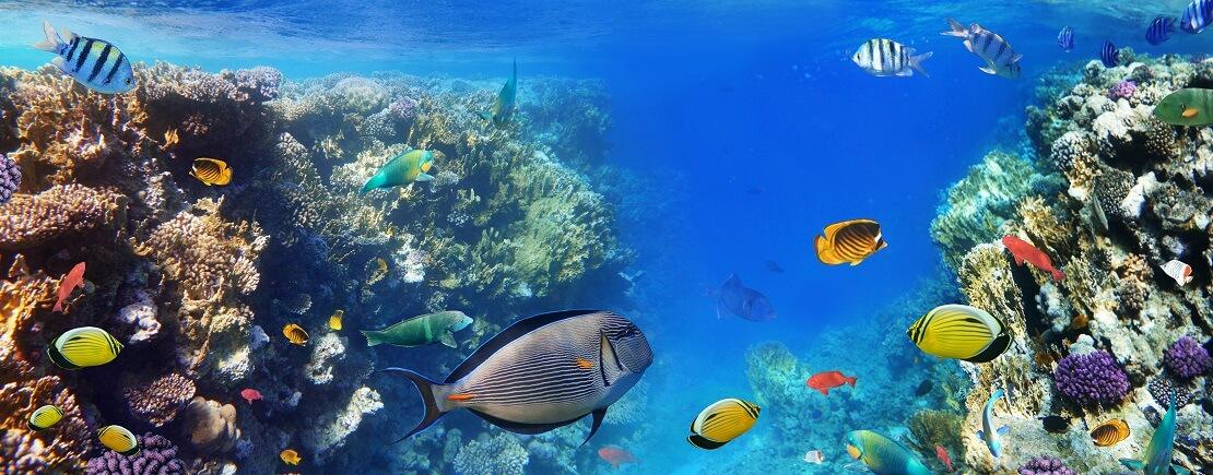 Verschiedene tropische Fische zwischen Korallen