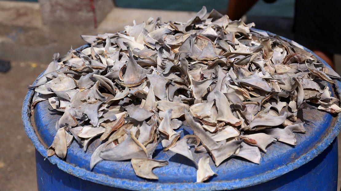 Abgetrennte Haifischflossen