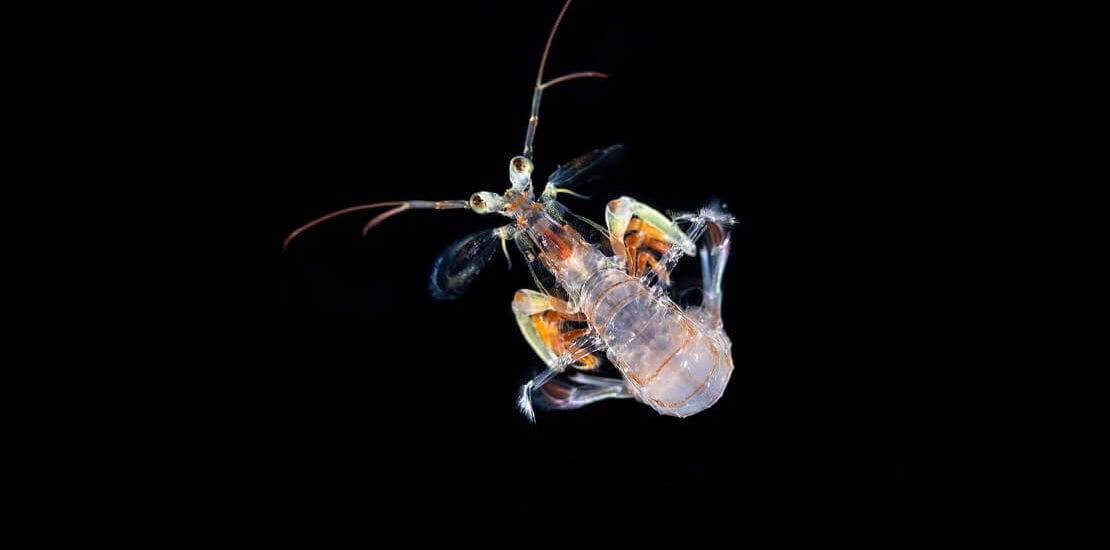 Blackwater Diving in Palau: Faszination in der Dunkelheit