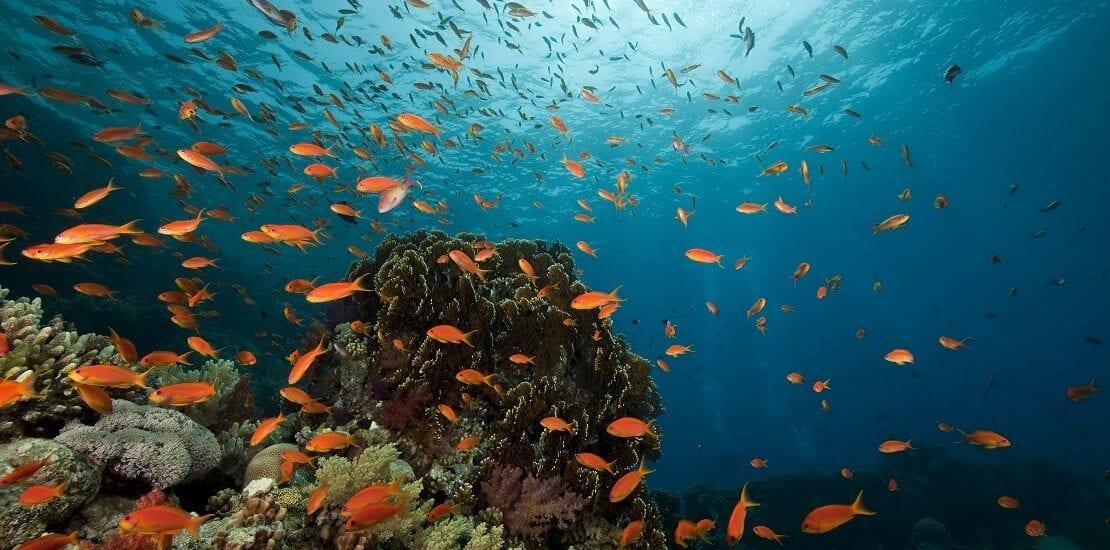 Ägypten: Bildschöne Korallen im Yolanda Reef