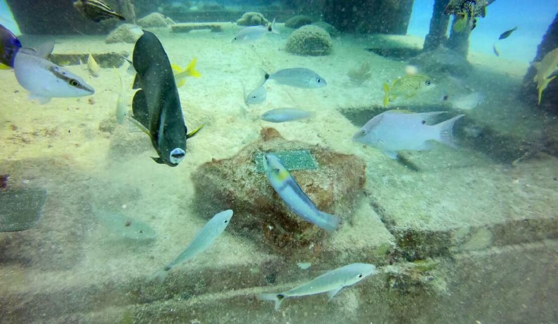 Eine Gedenktafel im Neptune Memorial Reef