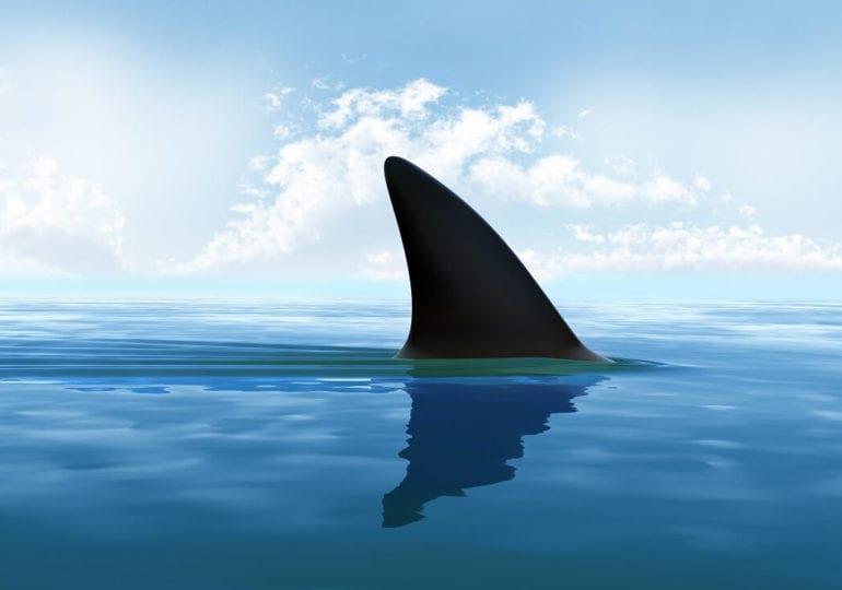 Stop Finning: Taucher können Haien helfen