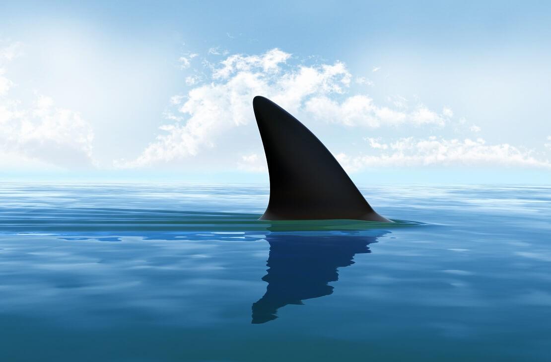 Eine Haifischflosse über der Wasseroberfläche