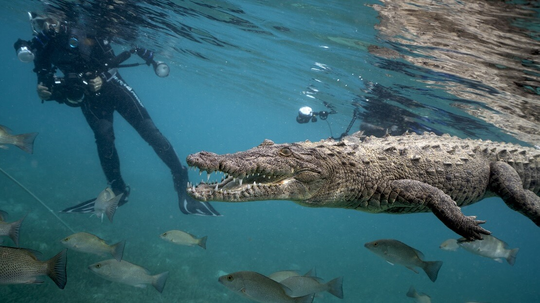 Krokodiltauchen vor Kuba