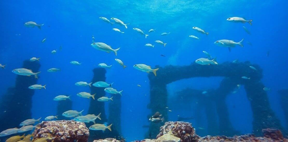 Florida: Die letzte Ruhe im Ozean finden