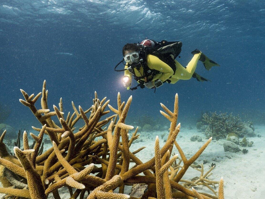 Taucherin über einer Hirschgeweih-Koralle