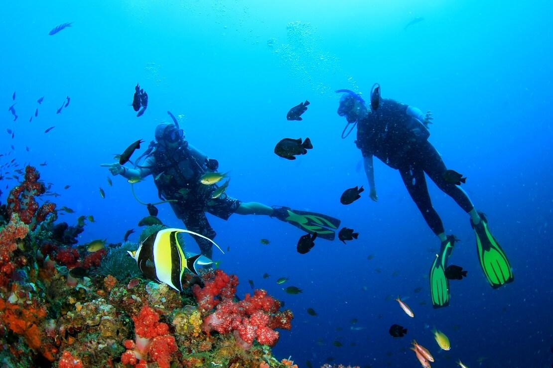Zwei Taucher entdecken ein Korallenriff mit Fischen