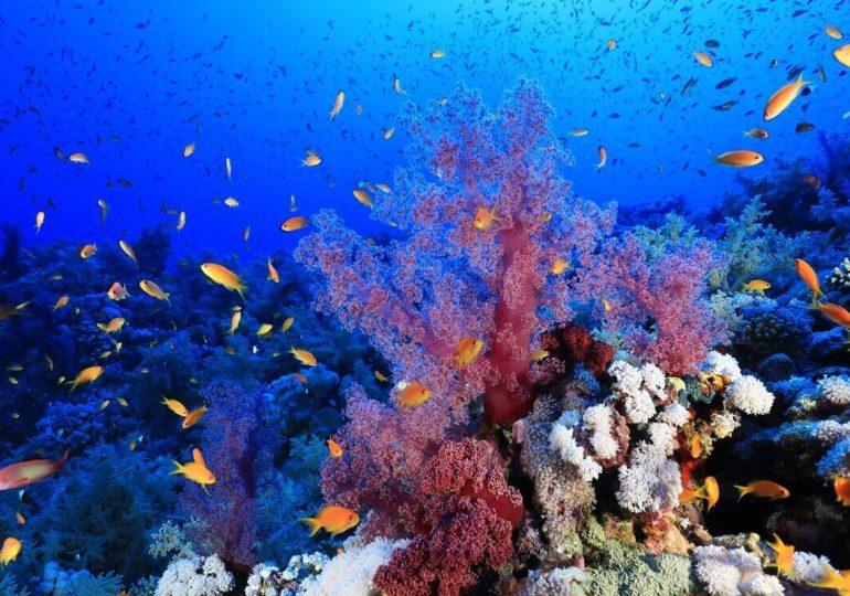 Ägypten: Mit Hammerhaien im Elphinstone Reef
