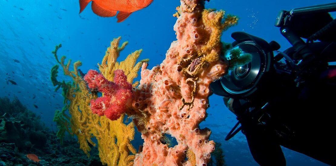Mosambik: Spektakuläre Meeresbewohner im Indischen Ozean