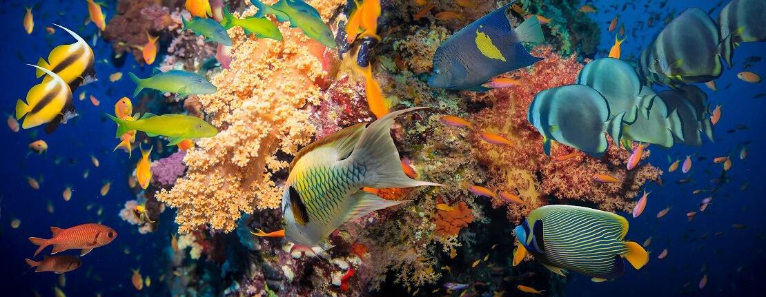 Buntes Korallenriff mit zahlreichen farbenfrohen Rifffischen