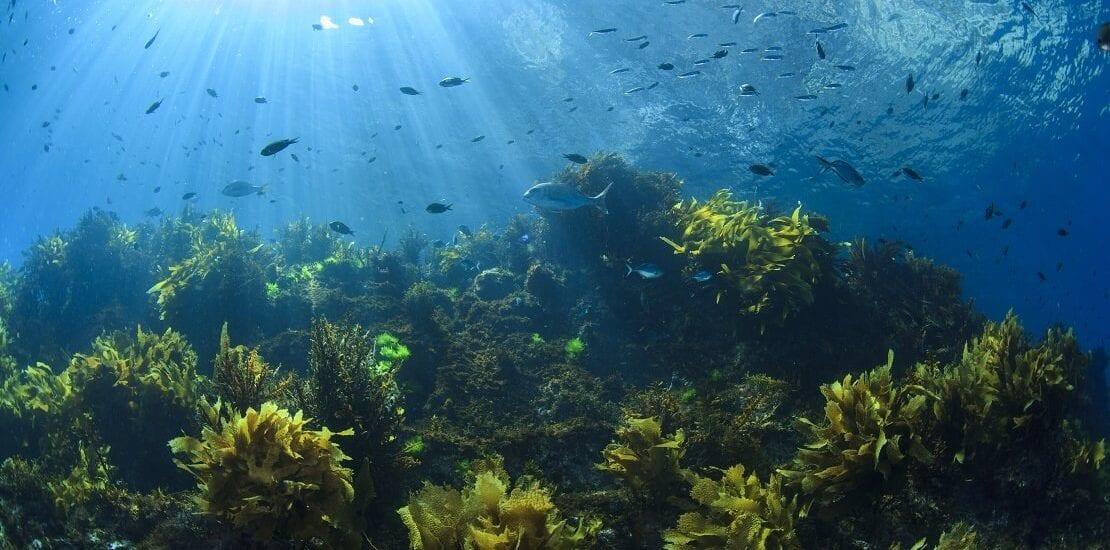 Poor Knights Island: James Cook benennt neuseeländische Insel nach seinem Toast