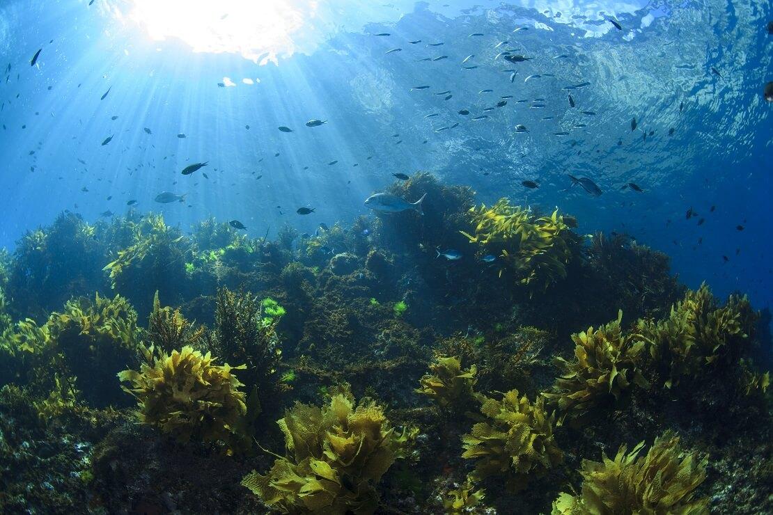 Die Unterwasserwelt von Poor Knights Island