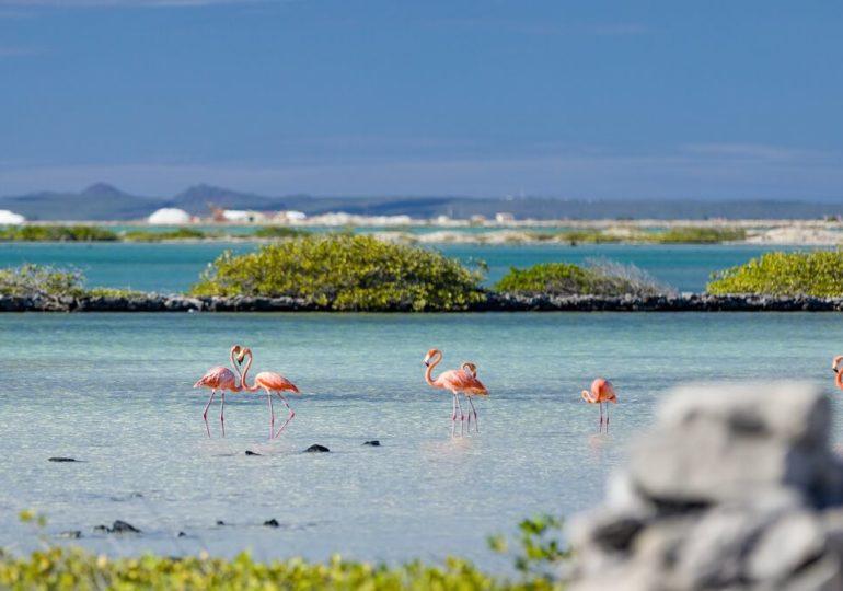"""Bonaire: Mit Delfinen vor der """"Insel der Flamingos"""""""