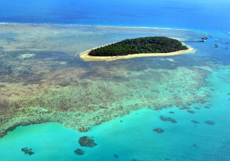 Älteste Koralle des Great Barrier Reef entdeckt