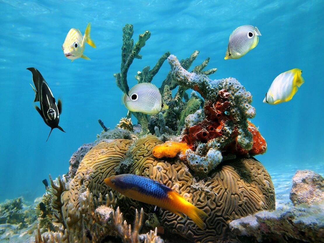 Ein interessantes Korallenriff mit verschiedenen Rifffischen